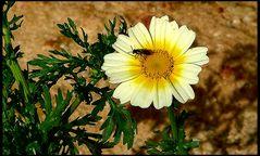 For flower day