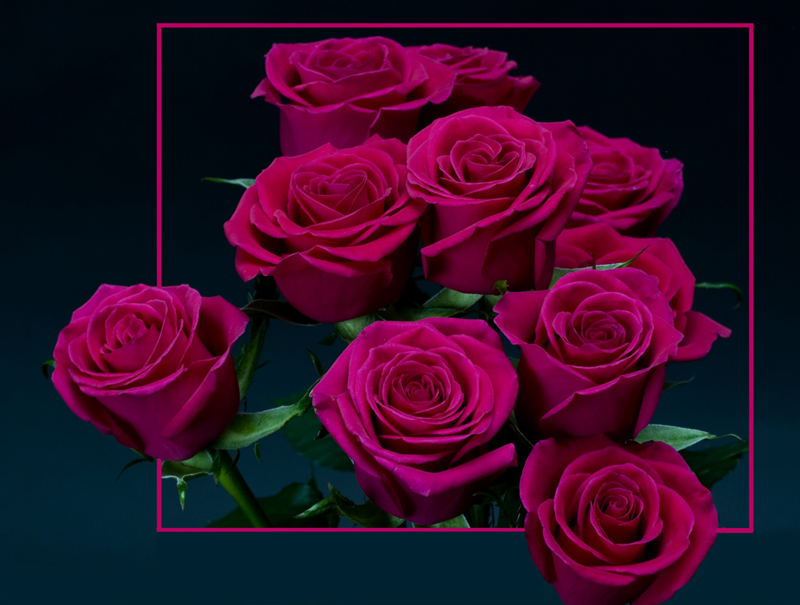 For YOU-2