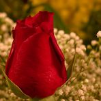 ... for you ...