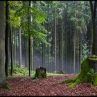 Forest (#2)
