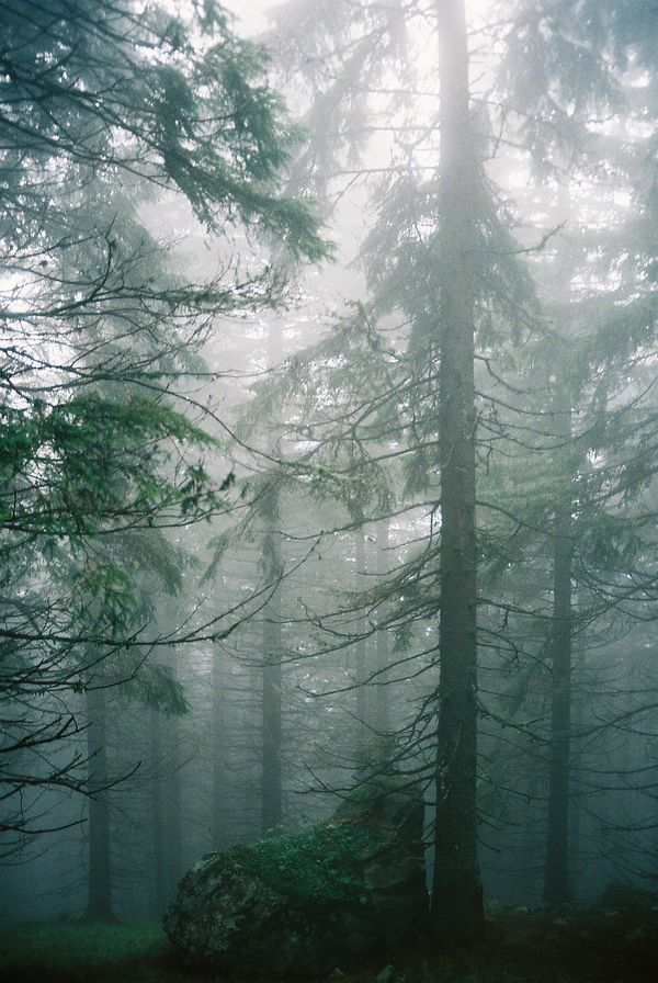 ~forest~