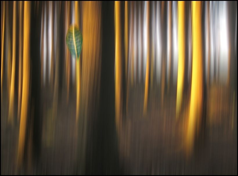 forest...