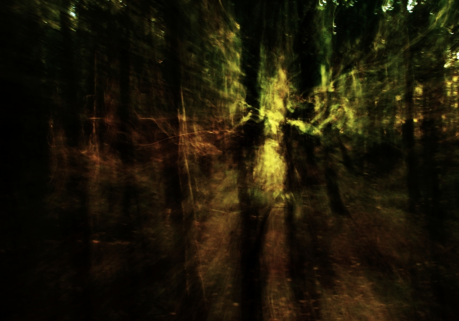 Forest I