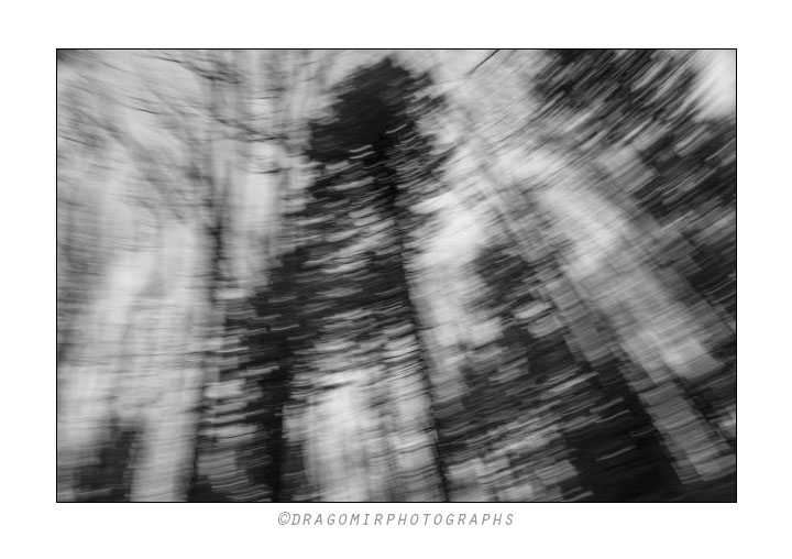 Forest Motion One 3