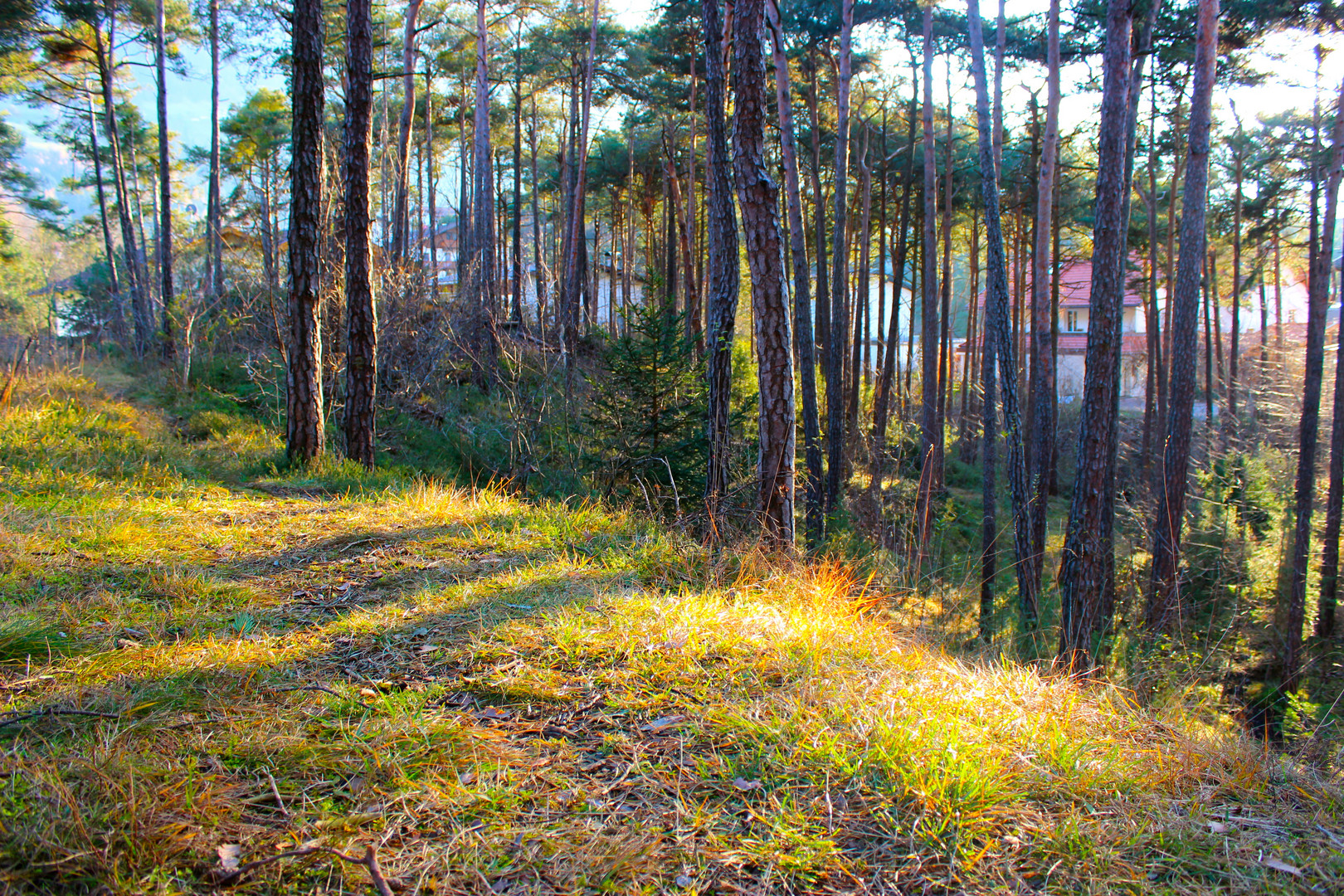 Forest near Ötztal BHF