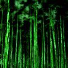 Forest near Peniche