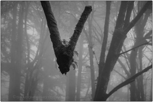 Forest V