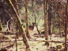 Forestlife