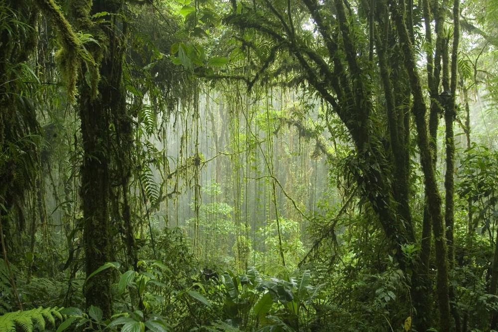 Foret primaire, Costa Rica