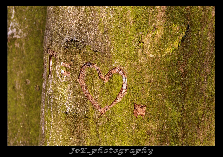 forever_in_love
