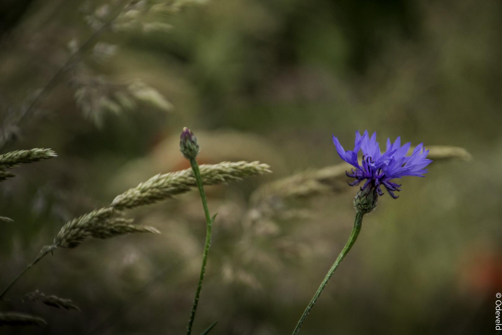 Forgotten flowers in the field side.