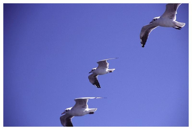 Formationsflug