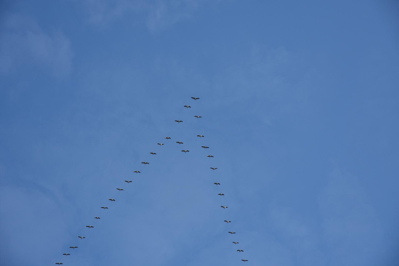 promo code 54edd 0b23b Formationsflug der Kraniche Foto & Bild | tiere, wildlife ...
