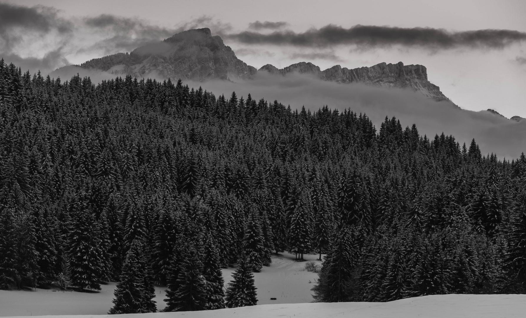 forêt alpine