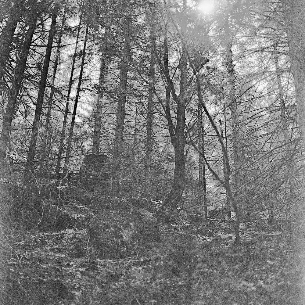 Forêt au Donon