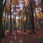 Forêt de Folgensbourg automne 2007