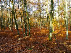 Forêt de fontainebleau en automne