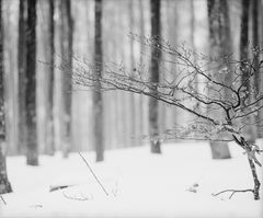 Forêt domaniale du Champ du Feu