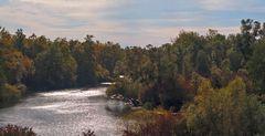 forêt fluviale en automne