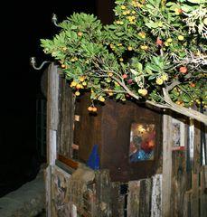 Fortaleza Dec-08