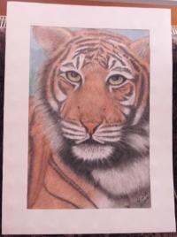 Fortsetzung Tiger