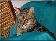 Forza caro Soneca, tornerai nella tua sedia amico.
