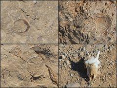 Fossil und rezent