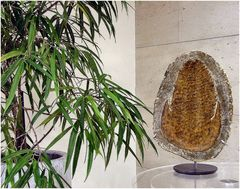 Fossile in Hall d`Hotel