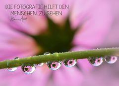 Fotgrafie 18