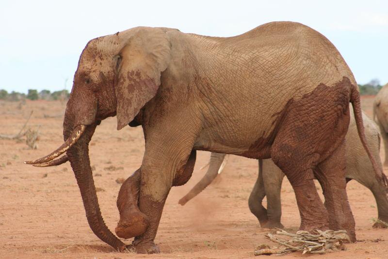 Foto dal Kenya