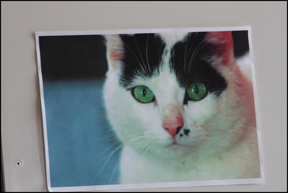 "foto della.... ""foto of my cat"""