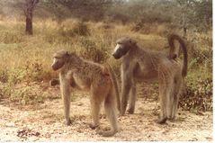 Foto di mio padre: Sud Africa, 1981_3