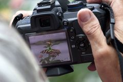 Foto-Workshop Makro-Fotografie