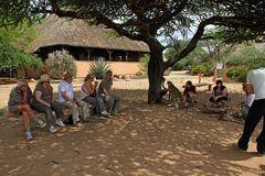 Foto-Workshop mit Geparden in Namibia