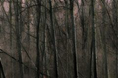 Foto/Gemälde