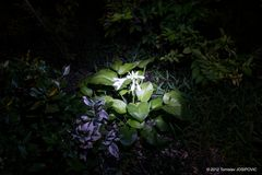 Fotografie - Malen mit Licht
