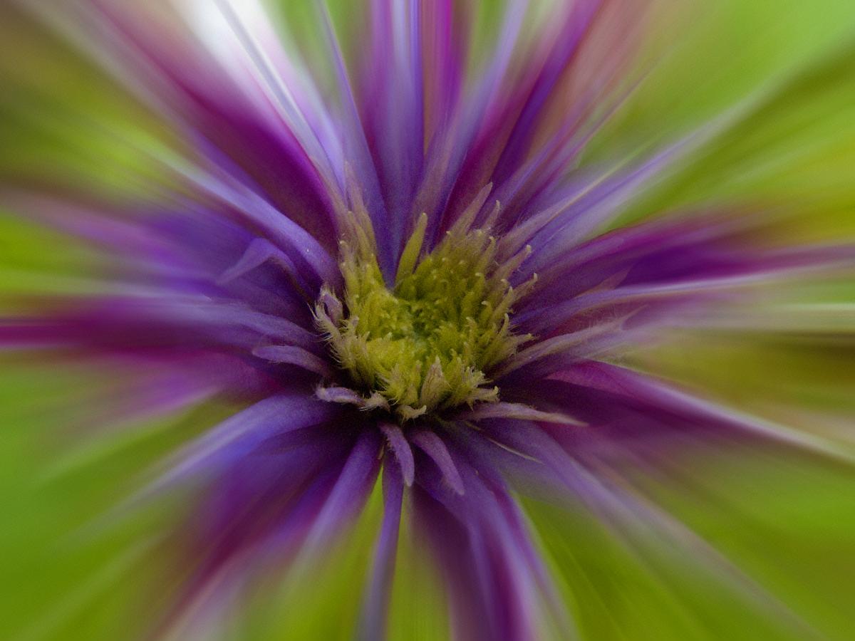Fotomontage mit Blüte