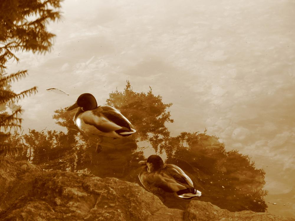 fotomontaggi della natura (lago di bled)