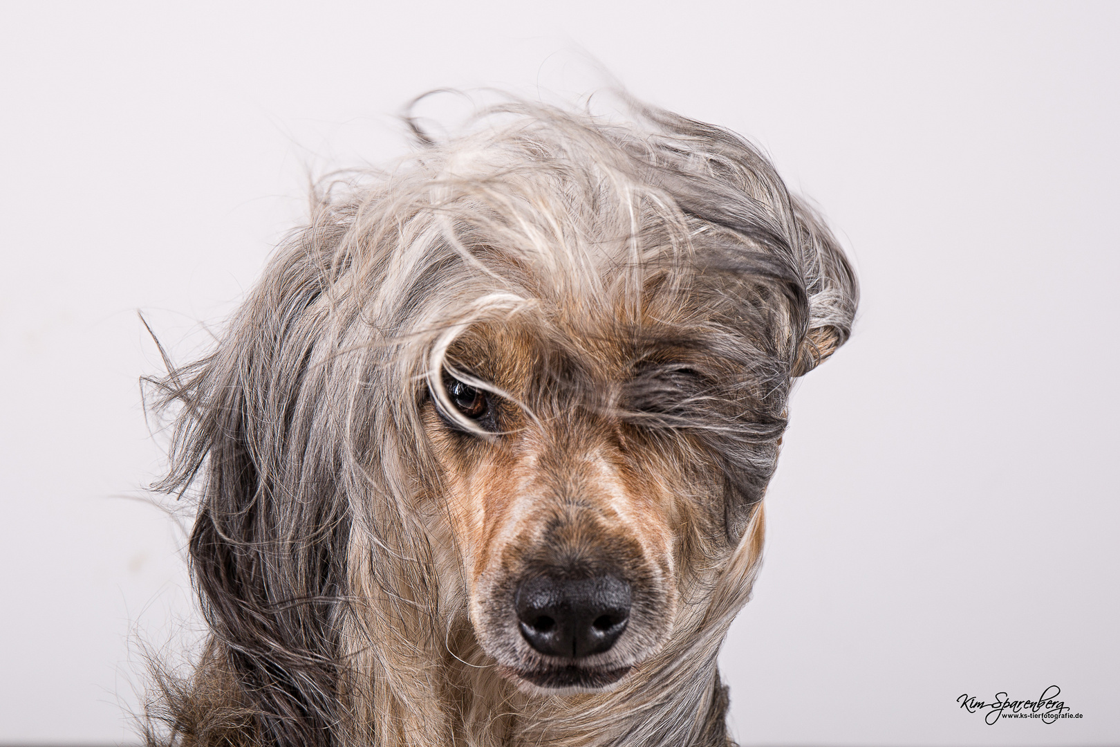 """Fotoprojekt """"Vom Winde verweht"""" 1 - Hunde mit Windmaschine"""