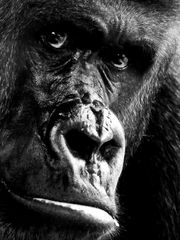 Fotosafari im Frankfurter Zoo P1130824