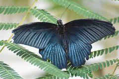 Fotoshooting im Schmetterlingsgarten D71 8025