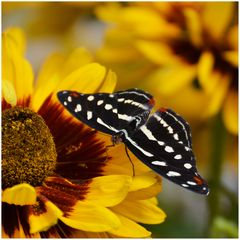 Fotoshooting im Schmetterlingsgarten D71 8029