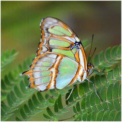 Fotoshooting im Schmetterlingsgarten D71_8052