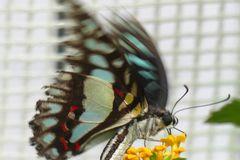 Fotoshooting im Schmetterlingsgarten P1130003