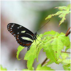 Fotoshooting im Schmetterlingsgarten P1130059