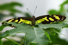 Fotoshooting im Schmetterlingsgarten P1130066