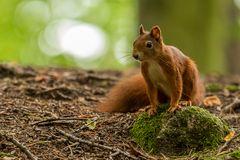 Fotoshooting mit einem Eichhörnchen