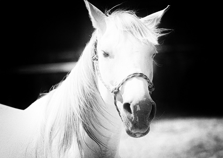 Fotoshooting mit einem Pferd