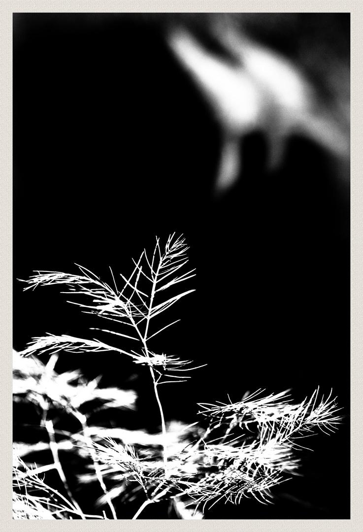 Fougère, la nuit