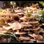 foule de champignons
